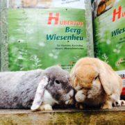 kaninchenheu-Willie-Werner2