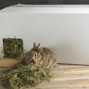 heuhaus-heu-fuer-kaninchen-meerschweinchen