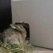 heuhaus-kaninchen-versteck