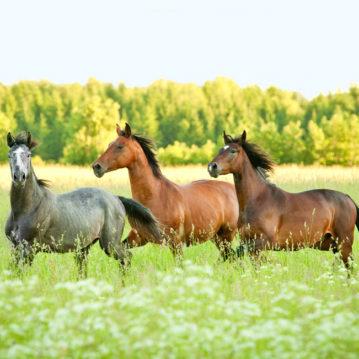 pferde-haben-hohe-ansprueche-an-heu