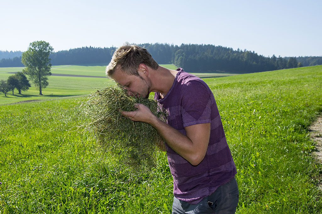 Florian Gollob examines here the moisture of the hay. In order to avoid crumbling losses in the hay, the sun can help to dry the hay only to a certain residual moisture.